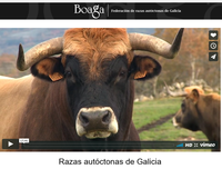 uploads/9/news/video_todas_razas_autoctonas.png